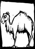 Постер, плакат: Верблюд