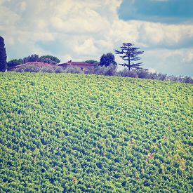 stock photo of farmhouse  - Italian Farmhouse in Tuscany Surrounded by Vineyards Olive Groves and Cypress Alleys Instagram Effect - JPG