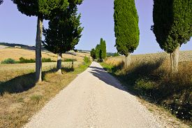 pic of farmhouse  - Cypress Alley Leading to the Farmhouse across the Plowed Fields in Tuscany Italy - JPG