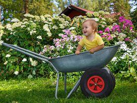 picture of hand-barrow  - Little Boy Standing In Garden Barrow outdoors - JPG