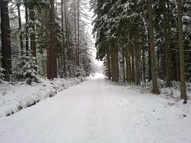 picture of blanket snow  - Road through the forest under a blanket of snow - JPG