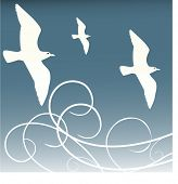 image of caw  - birds in flight vector - JPG