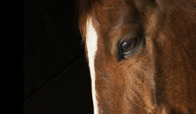 pic of wild horse running  - profile of horse - JPG