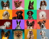 Little Dogs Are Posing And Looking In The Camera. Cute Doggies Or Pets Are Happy. The Different Pure poster