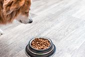 Dog Is Looking At A Bowl With Dry Food. Dog Food poster