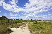 picture of martha  - dirt road on martha - JPG