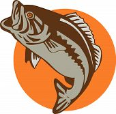 foto of bass fish  - vector art of a largemouth bass jumping - JPG