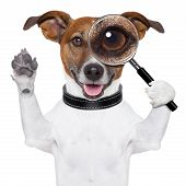 stock photo of goofy  - dog with a magnifying glass and searching - JPG