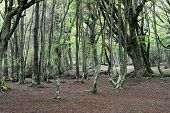 picture of tierra  - Green forest at Ushuaia - JPG