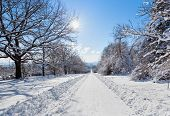 stock photo of icy road  - Deserted straight rural tree lined road covered in heavy winter snow with a section cleared down the centre for motor vehicles - JPG