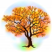 Beautiful autumn tree