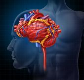 stock photo of blood vessels  - Heart brain shaped human organ as intelligence and research with a cardiovascular pumping blood as a medical and mental health care symbol for active neurons in the body on a black background - JPG