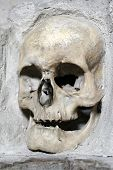 pic of exhumed  - skull from skull - JPG