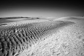Dunes In Sahara Black And White