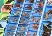image of lobster boat  - various types of fresh seafood for sale on a boat in Sai Kung harbour, Hong Kong