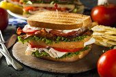 image of tomato sandwich  - Turkey and Bacon Club Sandwich with Lettuce and Tomato - JPG