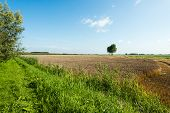 picture of roughage  - Landscape with a yellow and brown colored stubble field next to fresh green grass and reeds - JPG