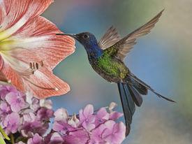 image of hummingbirds  - A beautiful The Swallow - JPG