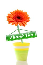 image of thank you note  - thank you or thanks greeting card with isolated flower on white - JPG