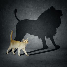 stock photo of lion  - Cat with lion shadow on the wall - JPG