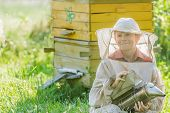 pic of beehive  - Teenage beekeeper farmer with painted wooden beehives - JPG