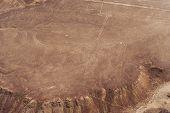 stock photo of geoglyph  - Desert View Nazca bird - JPG