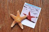 foto of starfish  - high - JPG