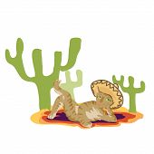picture of sombrero  - Cat in the Mexican sombrero resting under a cactus - JPG