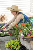 stock photo of plant pot  - Woman potting plants and nursery seedlings into decorative flowerpots on a hot spring day sitting in the shade on her outdoor patio as she works view past colorful flowers - JPG