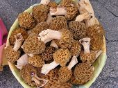 image of morel mushroom  - lots of morchella mushrooms newly collected in the forrest and ready for dinner preparation - JPG