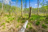 pic of wetland  - Beautiful landscape with wetlands at springtime - JPG