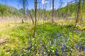 foto of wetland  - Beautiful landscape with wetlands at springtime - JPG