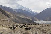 stock photo of mustang  - Kagbeni city in lower Mustang district Nepal - JPG
