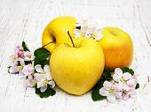 picture of apple blossom  - apples and apple tree blossoms on a wooden background - JPG