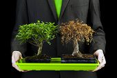 picture of bonsai  - businessman holding dead and alive bonsai trees Environment and ecology conceptual image - JPG