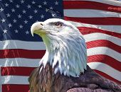 stock photo of american flags  - eagle with american flag background - JPG