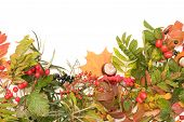 picture of rowan berry  - border made of autumn leaves and wild forest fruits - JPG