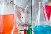 White rabbit in scientific lab experiment poster
