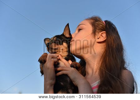 poster of Chihuahua Dog Small Breed Dogs. Dog Is A Friend Of Man. Beautiful Young Caucasian Girl Holding With