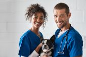 Adorable cute dog sitting at vet hospital with doctors looking at camera. Cheerful vet and african n poster