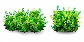 Garden Bush. Green Garden Vegetation Bushes Icon. Ornamental Plant Shrub For Decorate Landscape Park poster