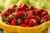 Strawberries / Freshly Picked Strawberries. Strawberries, Close-up, Soft Focus.ripe Red Strawberries poster