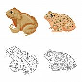 Vector Illustration Of Wildlife And Bog Sign. Set Of Wildlife And Reptile Vector Icon For Stock. poster
