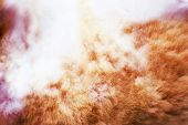 Feline Fur Texture Background, Fluffy Sheared White And Red. poster