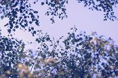 Autumn Leaves Vintage Background. Autumn Background Nature. Fall Background Vintage Photo. Yellow Le poster