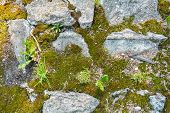 Broken And Destroyed Old Cement Blocks And Ground Between Them With Moss, Grass And Gravel. Old Path poster