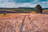 Central Russia Agricultural Countryside With Hills And Country Road. Summer Landscape Of The Samara poster