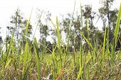 Grass. Foreground Grass With Blurred Background. Large Grass In Forest Backround. poster