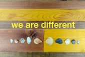 Seashells Of Various Sizes And Shapes Down - Concept Of The Union Of Differences - On The Wooden Tab poster