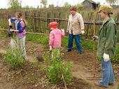 stock photo of household farm  - family working at the small rural farm